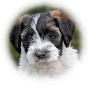 Een nieuwe pup