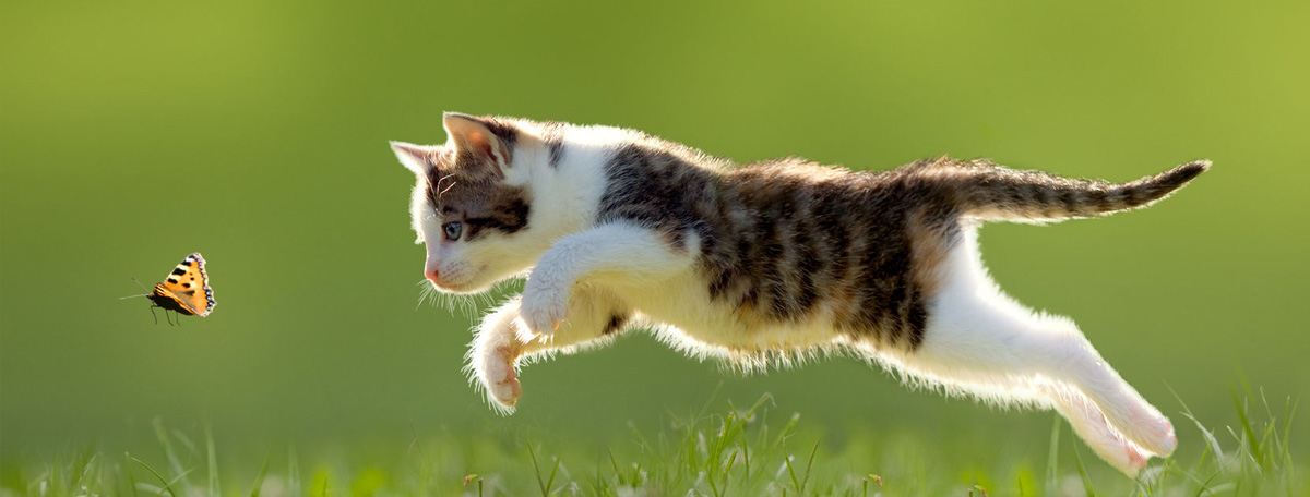 Kat met vlinder